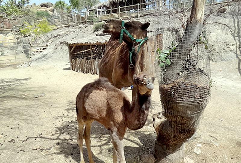 Arcoiris con su mamá
