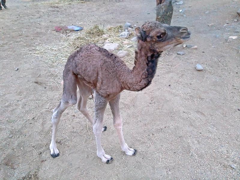 Arcoiris recién nacido