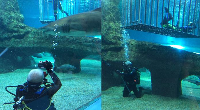 Aquarium Roquetas de Mar - Inmersión con tiburones