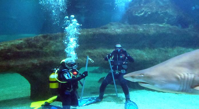 playasenator-buceo-tiburones2