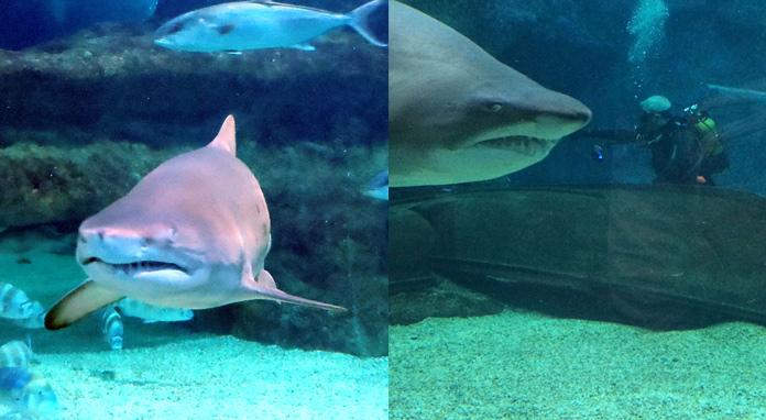 Playa Senator buceo en Almería - Aquarium Roquetas de Mar