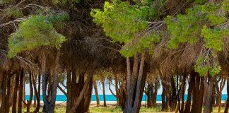 Mejores playas naturistas provincia de Almería