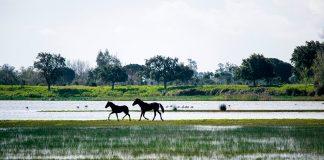Parque nacional de Doñana: qué ver y hacer