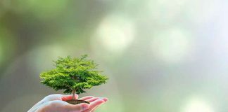 Hotelería Eco-Friendly en Senator Hotels & Resorts