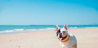 Las mejores playas que admiten perros en España